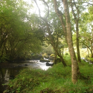 flowing-stream-in-moycullen-countryside