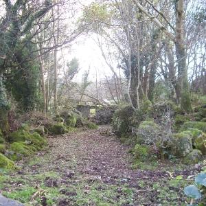 moycullen-woods