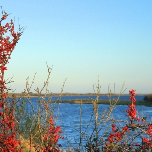red_berries-moycullen-countryside-m-larkin