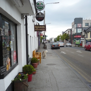 moycullens-four-legged-resident-on-the-main-street-galway