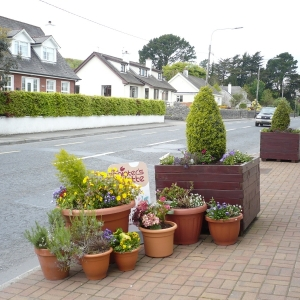 street-plants-in-moycullen-galway